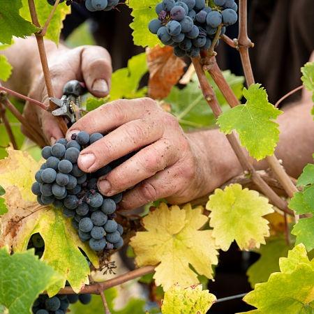 michel thibault vin bio bourgueil