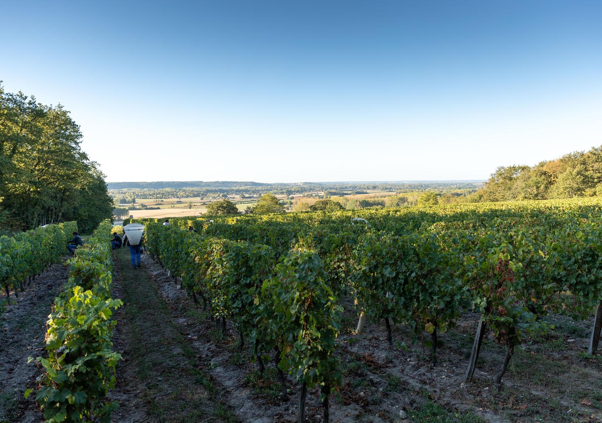 randonne vignes bourgueil