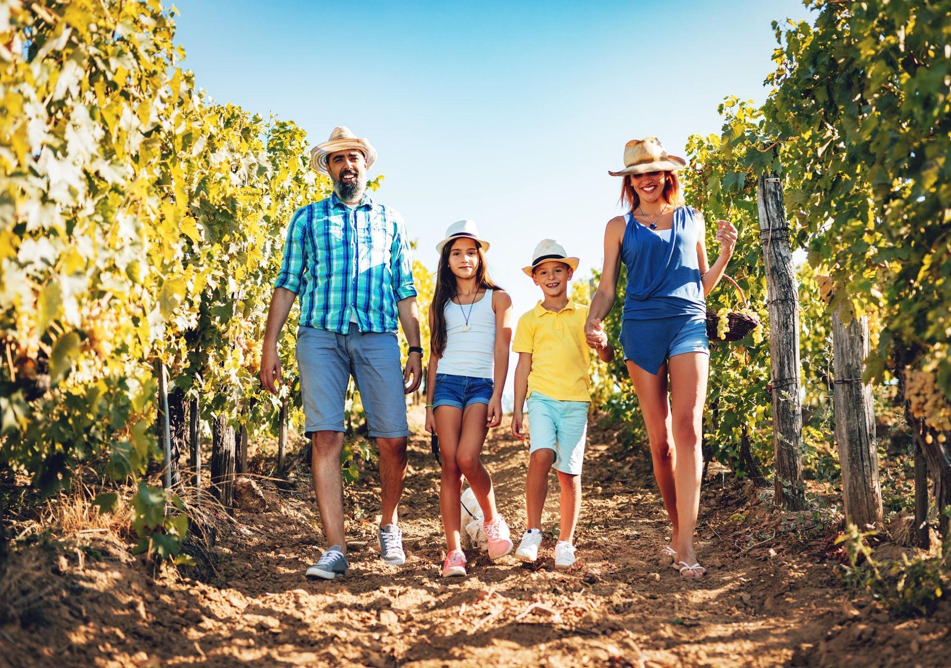 famille vignes randonnée bourgueil cabernet franc
